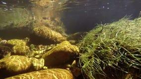 Aquatic plants and rocks underwater stock video