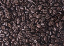 Close up arabica coffee beans. For background Stock Photography