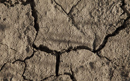 Close-up of arid cracked earth Stock Photography