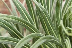 Close-Up Of Arid Vegetation In California Royalty Free Stock Images