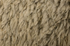 Close-up of Arles Merino sheep wool Royalty Free Stock Photos
