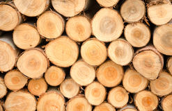 Close-up Arrange Orderliness  of the timber.  Royalty Free Stock Photography