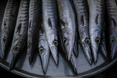 Close up arrangement for sale in sea food market of Indo-Pacifi. C King mackerel, Spotted mackerel, Seerfish royalty free stock image