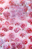 Close up of an array of pink roses Royalty Free Stock Photos