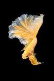 Close up art movement of Betta fish Stock Photos