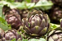 Close up of artichoke bud Stock Image