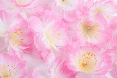 Close up of artificial flowers over white Royalty Free Stock Photography