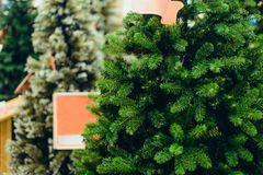 Close up artificial green Christmas trees for sale in the market, shop. Prepearing for Christmas eve, new year party. Selective fo. Cus, copy space stock image