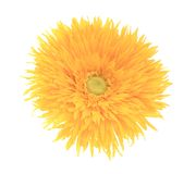 Close up of artificial yellow flower aster. Isolated on a white background Royalty Free Stock Photography