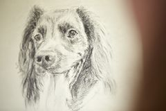 Close Up Of Artist Sitting At Easel Drawing Picture Of Dog In Charcoal royalty free stock photo