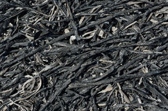 Ash after fire 5. A close up of the ash after brushfire royalty free stock photos