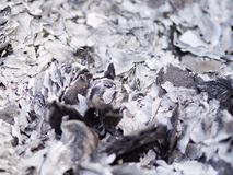 Close up ashes and cinders from ghost money paper burning for Ancestor in Chinese New Year royalty free stock photos
