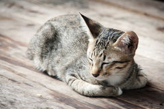 Close up asleep stray cat on the floor Royalty Free Stock Images