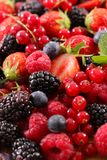 Assortment of berries. Close up on assortment of berries Royalty Free Stock Images