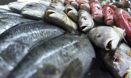 Assortment of fishes Royalty Free Stock Photos