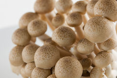 Close up of an assortment of mushrooms Royalty Free Stock Photos