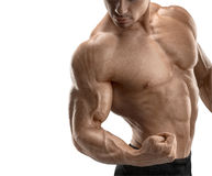 Close-up of athletic muscular hand Royalty Free Stock Image