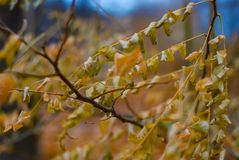 Close-up of autumn golden foliage with a soft blurred background stock images