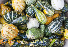 Close up of autumn harvest Royalty Free Stock Images