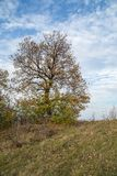 Close up of autumn hill in forest. Royalty Free Stock Photography