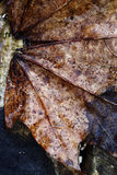Close-up of a autumn leaf Stock Images