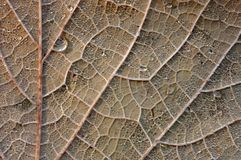 Close up of an autumn leaf. stock photography