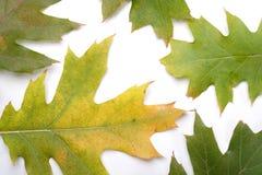 Close-up of autumn leaf - studo shot Stock Photos