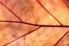 Close-up of autumn leaf - studo shot Stock Images