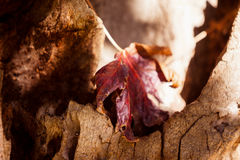Close-up of autumn leaf on tree trunk Stock Images