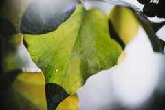 Close up on autumn leaf with water drops Royalty Free Stock Images