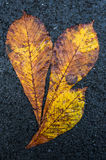 Close up of autumn leaves on asphalt road texture Stock Photography
