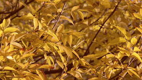 Close up autumn leaves background stock video