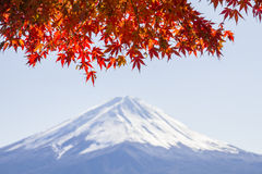 CLOSE UP Autumn leaves and blur background Fuji mountain Royalty Free Stock Images