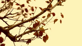 Close up autumn leaves over blue sky background Royalty Free Stock Images