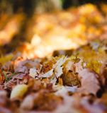 Close up of autumn leaves piled up in the park. At autumn stock photos