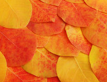 Close-up of autumn leaves put tightly Royalty Free Stock Image