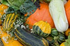 Close up autumn vegetable marrow pumpkin flower Royalty Free Stock Photos