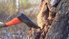 Close up axe in strong hands lumberjack. Woodcutter cuts tree in forest. Wooden chips fly apart. Concept of industry and. Forestry. Blurred background stock video