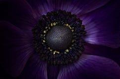 Close-up azul incomum da flor Fotografia de Stock Royalty Free