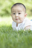 Close-up of a baby. An Asian baby on grass is looking forwards curiously Stock Images