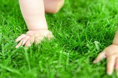 Close-up baby crowling through green grass lawn. Details infant hand walking in park . Child discovering and exploring nature and. Earth concept. Making first stock image