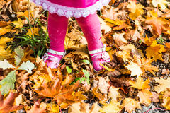 Close-up of  baby feet in shoes on autumn leaves Royalty Free Stock Image