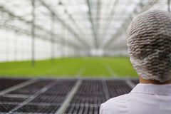 Close-up back biotechnology woman engineer. Examining a plants for disease from greenhouse farm Stock Images