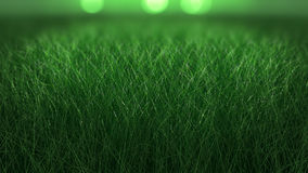 Close up backdrop of fresh thick grass Stock Image