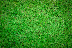 Close up background of beautiful green grass pattern. Stock Photography