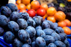 Close up background of dark blue plums. Outdoors Stock Images