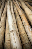 Close up background of dry thick bamboo poles Royalty Free Stock Photography