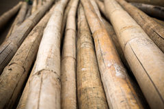 Close up background of dry thick bamboo poles Stock Photos