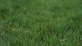 Close-up background of green grass. stock video footage