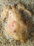 Baked salt crust chicken Stock Image